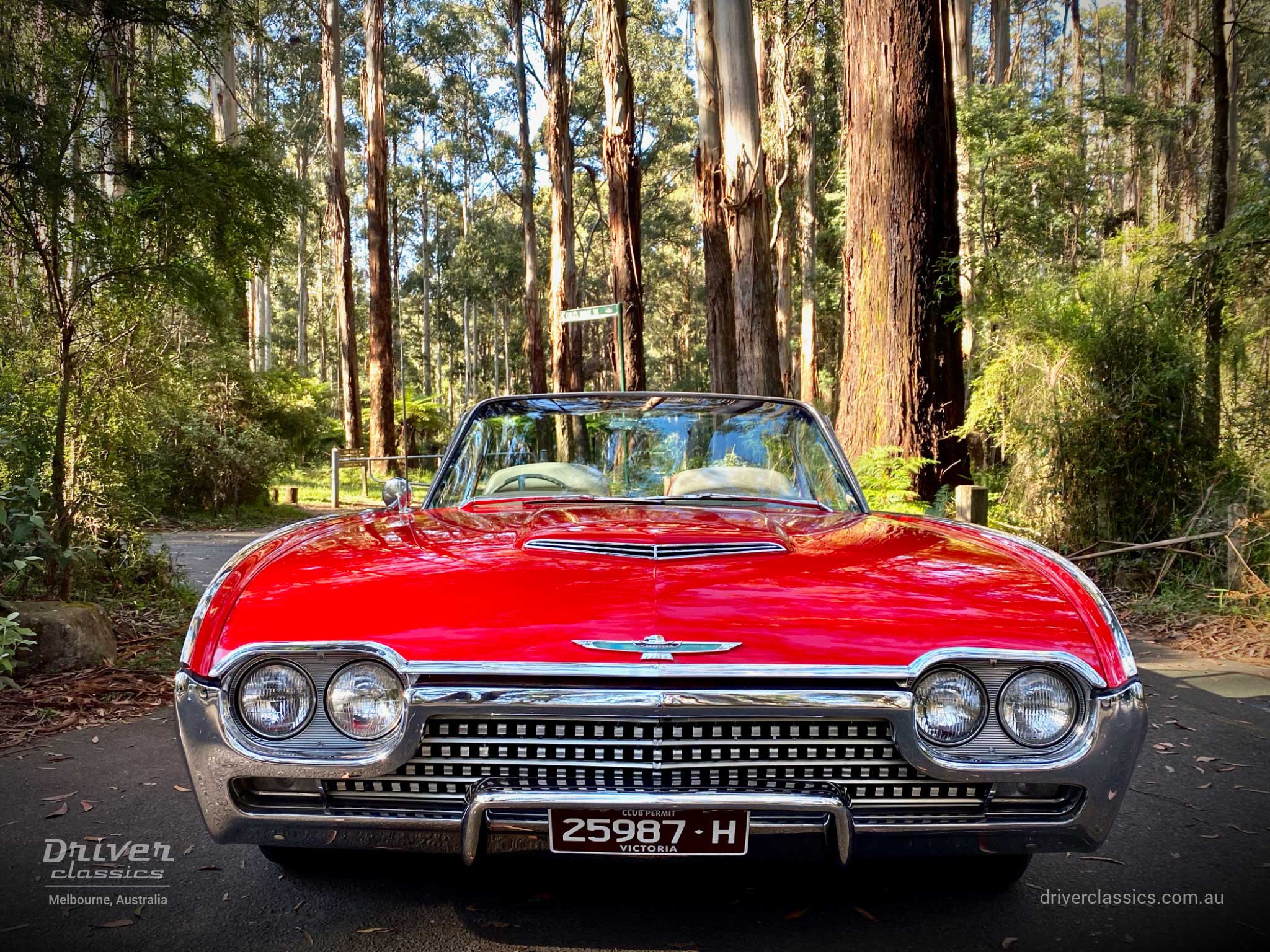 Ford Thunderbird Roadster 1962 version, front close up, Dandenong Ranges, Grants Picnic ground, Photo taken Dec 2019