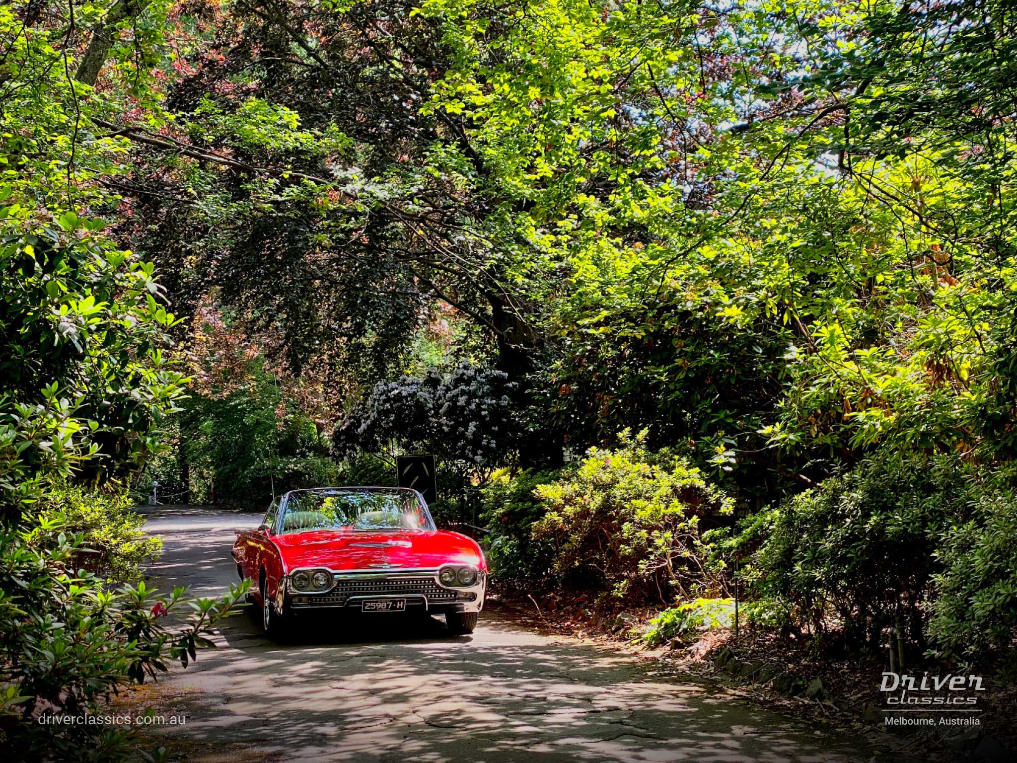Ford Thunderbird Roadster 1962 version, front, Dandenong Ranges Gardens, Photo taken Dec 2019